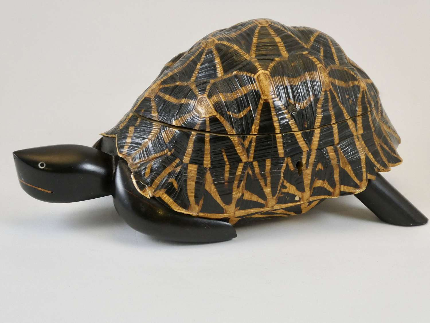 Indian Star Tortoise Trinket Box